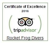 tripadvisor-rocket-frog